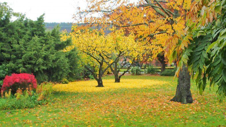 Garden Autumn Colours